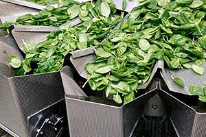 Extra für Salat: Die Mehrkopfwaage CCW-RV schafft bis zu 70 Takte pro Minute.