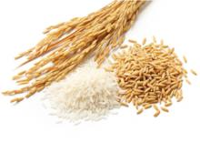 Reispflanze