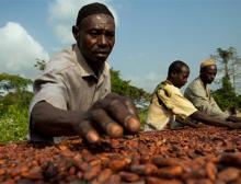 Kakaobauer