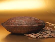 Kakaobohne