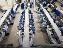 Sortieranlagen für Geflügelprodukte bei Almarai