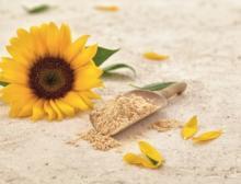 """Sonnenblumenlecithin von Sternchemie erhält """"GRAS"""" No-Objection Letter der FDA"""
