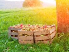 Der Verband der deutschen Fruchtsaft-Industrie rechnet mit einem Streuobst-Ernterückgang um ca. 65 Prozent